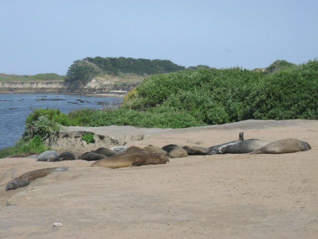 "Also elephant seals, with one playing ""Smell My Armpit."""
