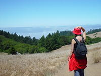 A Day at Mount Tam 103650