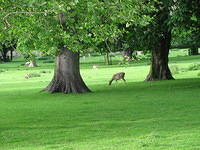 That's right. This college has it's own private DEER PARK. (Michele, take note.)