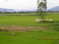 rice paddies every where