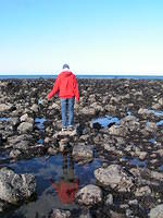 one morning we went to some tidepools up 101.