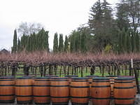 Barrels and vines and trees and grass and sky.